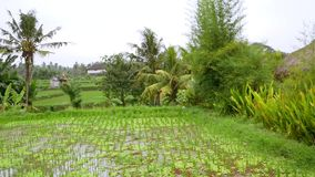 Vista aérea de campos e de casa do arroz em Bali vídeos de arquivo