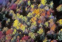 Vista aérea de cores e de árvores do outono nas montanhas do VT foto de stock