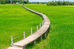 Vista aérea de la calzada concreta larga en campo verde del arroz Foto de archivo