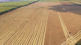 Vista aérea de la colección de la cosecha del trigo almacen de metraje de vídeo