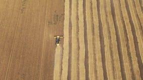 Vista aérea de la cosecha del trigo almacen de video