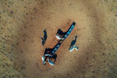 Vista aérea de la escena rural con las vacas y los caballos en el campo imagen de archivo