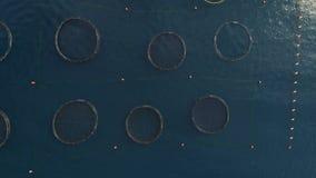 Vista aérea de la granja de pescados en la bahía de Kotor metrajes