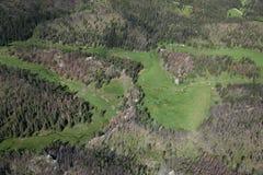 Vista aérea de la infestación del escarabajo del pino fotografía de archivo libre de regalías