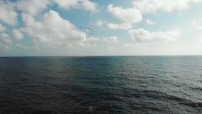 Vista aérea de la multitud de los pájaros que vuelan sobre el mar ondulado con las ondas que golpean la playa rocosa Abejón tirad almacen de metraje de vídeo