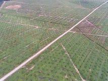 Vista aérea de la plantación del aceite de palma situada en el krai de Kuala, Kelantan, Malasia, el Este de Asia Imagen de archivo libre de regalías