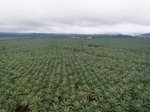 Vista aérea de la plantación del aceite de palma situada en el krai de Kuala, Kelantan, Malasia, el Este de Asia Fotografía de archivo libre de regalías