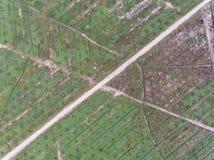 Vista aérea de la plantación del aceite de palma situada en el krai de Kuala, Kelantan, Malasia, el Este de Asia Fotografía de archivo