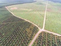 Vista aérea de la plantación del aceite de palma situada en el krai de Kuala, Kelantan, Malasia, el Este de Asia Imagenes de archivo