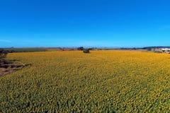 Vista aérea de la plantación del girasol con el cielo azul, el campo y la escena rural imagenes de archivo