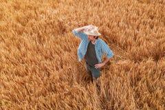 Vista aérea de la situación del granjero en campo maduro de la cosecha del trigo fotografía de archivo