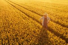 Vista aérea de la situación del granjero en campo de trigo maduro de oro foto de archivo