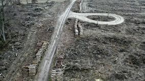 Vista aérea de la tala de árboles, bosque destruido después del huracán almacen de video