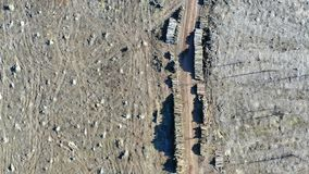 Vista aérea de la tala de árboles Bosque que es quitado para hacer la madera almacen de metraje de vídeo