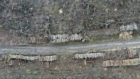 Vista aérea de la tala de árboles del bosque después de pasar el tornado almacen de video