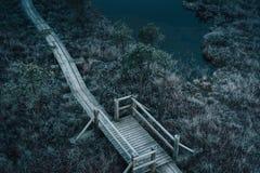 Vista aérea de la trayectoria de madera, camino en pantano en invierno temprano Imagen de archivo