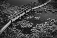 Vista aérea de la trayectoria de madera, camino en pantano en mañana temprana del invierno Fotografía de archivo libre de regalías