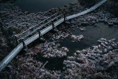 Vista aérea de la trayectoria de madera, camino en pantano en mornin temprano del invierno Imagen de archivo