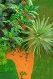Vista aérea de la yarda verde enorme con los árboles de la palmera y de plátano de hierba verde Fotos de archivo libres de regalías