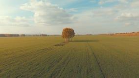 Vista aérea de las tareas de una granja del otoño Árbol solo en el centro almacen de video