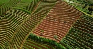 Vista aérea de las tierras de labrantío colgantes enormes almacen de video