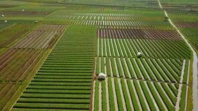 Vista aérea de las tierras de labrantío de la cebolla y de la irrigación del agua metrajes
