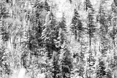 Vista aérea de los árboles cubiertos por la nieve en un bosque, en el lado de la montaña Umbría de Subasio, creando una clase de  Imagenes de archivo