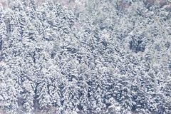 Vista aérea de los árboles cubiertos por la nieve en un bosque, en el lado de la montaña Umbría de Subasio, creando una clase de  Fotografía de archivo libre de regalías