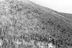 Vista aérea de los árboles cubiertos por la nieve en un bosque, en el lado de la montaña Umbría de Subasio, creando una clase de  Fotos de archivo libres de regalías