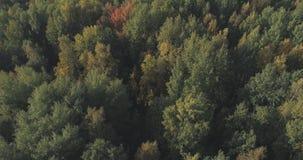 Vista aérea de los árboles del otoño en bosque en septiembre Fotos de archivo libres de regalías