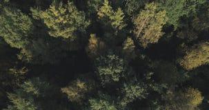 Vista aérea de los árboles del otoño en bosque en septiembre Foto de archivo libre de regalías