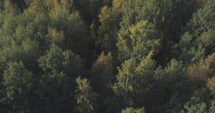 Vista aérea de los árboles del otoño en bosque en septiembre Fotografía de archivo