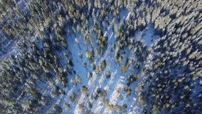 Vista aérea de los árboles de pino en las montañas Fotografía de archivo libre de regalías