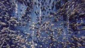 Vista aérea de los árboles de pino en las montañas Imágenes de archivo libres de regalías