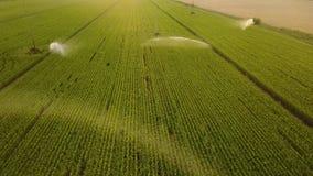 Vista aérea de los campos de maíz que son irrigados con la granja de centro del maíz del sistema del pivote a gran escala Cantida metrajes