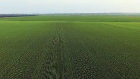 Vista aérea de los campos de trigo metrajes