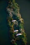 Vista aérea de Paramotor imagens de stock