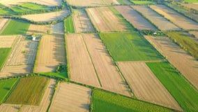 Vista aérea de plantações verdes video estoque