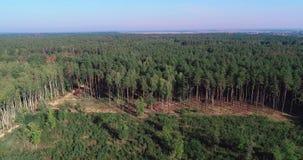Vista aérea de registro, desflorestamento em uma escala industrial, desflorestamento com equipamento especial, desflorestamento d filme