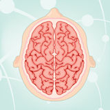 Vista aérea de um cérebro Fotos de Stock Royalty Free