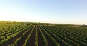 Vista aérea de um vinhedo filme