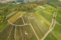 Vista aérea de um vinhedo verde do verão imagem de stock