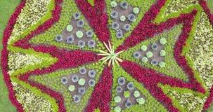 Vista aérea de uma cama de flor video estoque