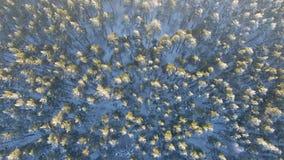 Vista aérea de uma floresta do inverno filme