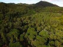 Vista aérea de uma floresta do pinho fotos de stock