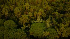 Vista aérea de uma floresta do pinho fotografia de stock