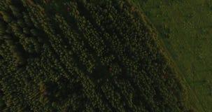 Vista aérea de uma floresta grossa no verão video estoque