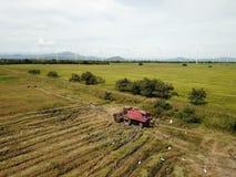 Vista aérea de un arroz de la cosecha mecánica de la cosechadora en un campo en P imágenes de archivo libres de regalías