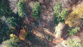 Vista aérea de un bosque metrajes