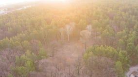 Vista aérea de un bosque pino-de hojas caducas en primavera temprana en el amanecer almacen de metraje de vídeo